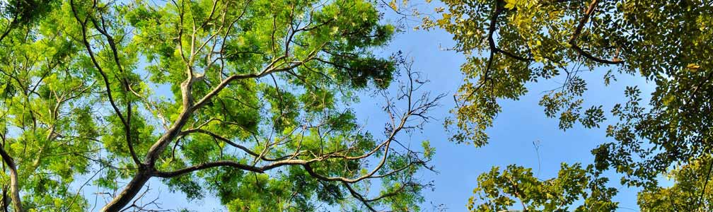 tree canopy with blue sky